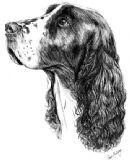 English Springer Spaniel Personalised Greetings Card
